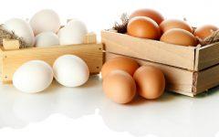 Os 11 Fatos Surpreendentes Que Você Não Sabia Sobre Ovos