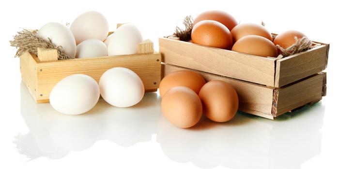 fatos sobre os ovos