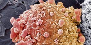 ingredientes para combater o cancer