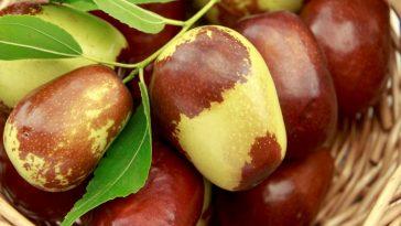 beneficios da fruta jujuba