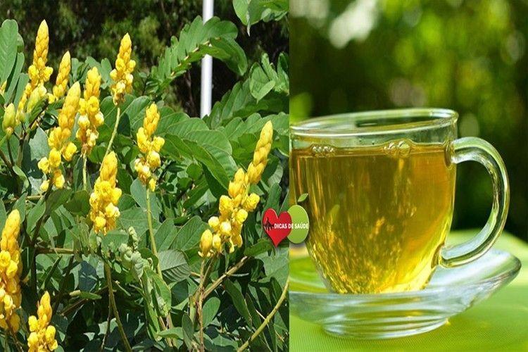 onde encontrar e como fazer chá de sene?