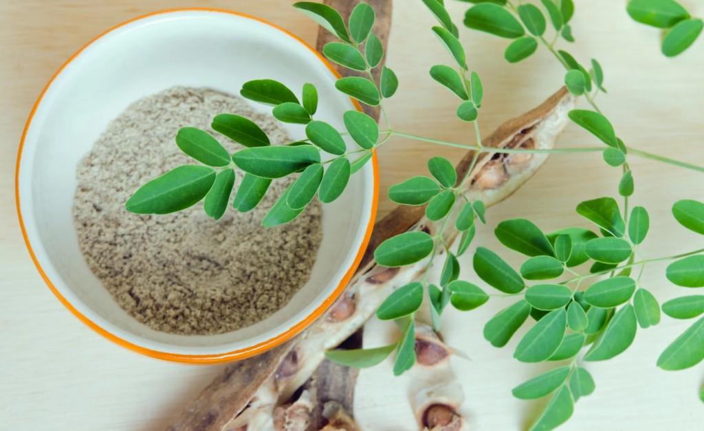 beneficios da moringa oleifera