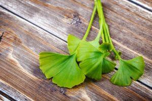 Benefícios do ginkgo biloba