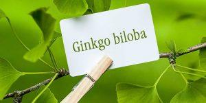 quais os benefícios do ginkgo biloba?