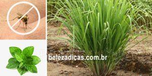 melhores plantas para repelentes de mosquitos