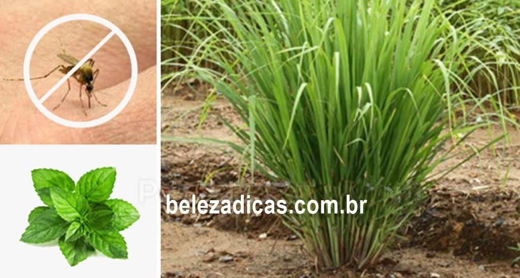 Melhores Plantas que São Repelentes de Mosquitos