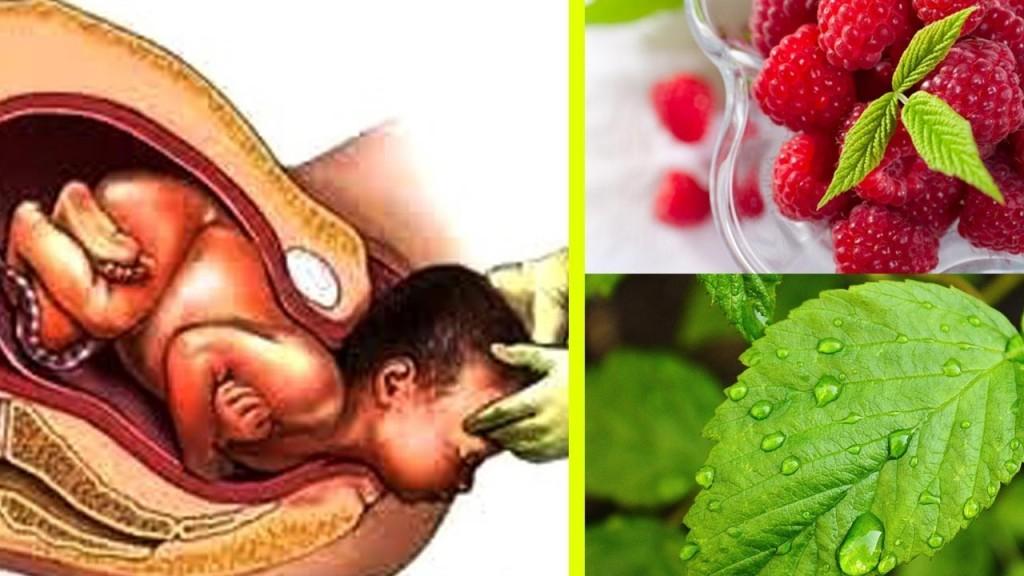 beneficios do cha da folha de framboesa para gravidez