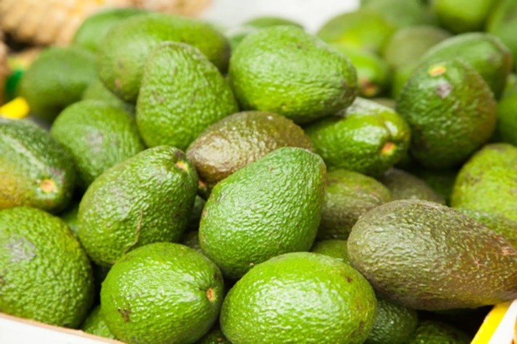 abacate para saúde