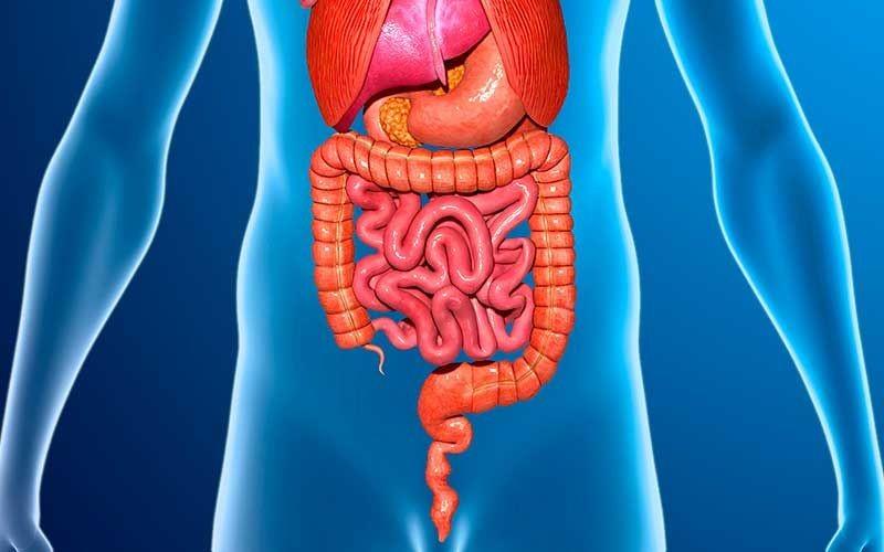 Benefícios dos Aspargos Para Digestão