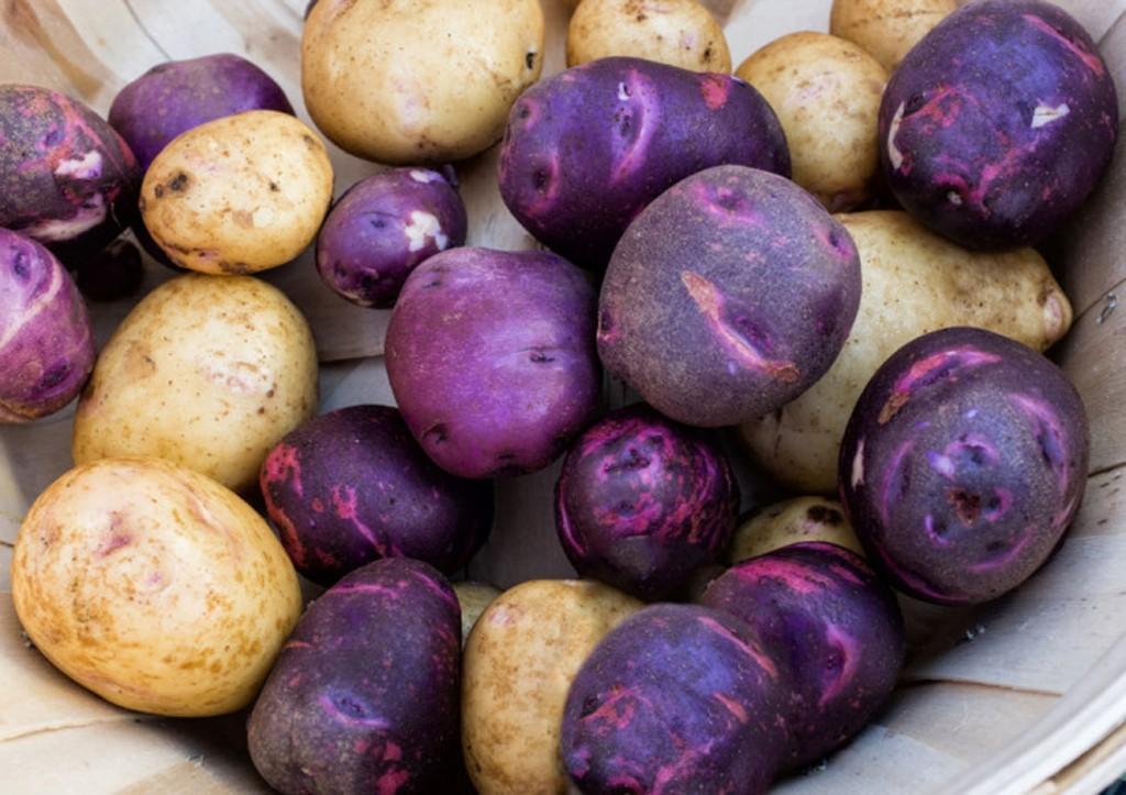 beneficio da batata