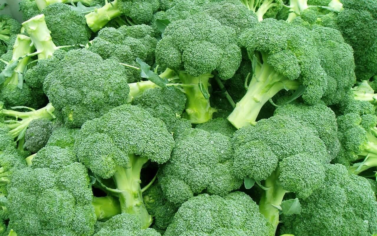 brocolis para saude