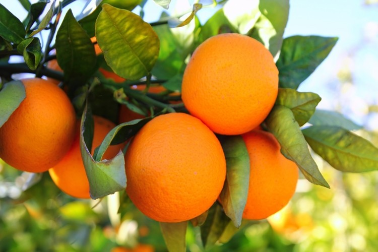 o que é a laranja?