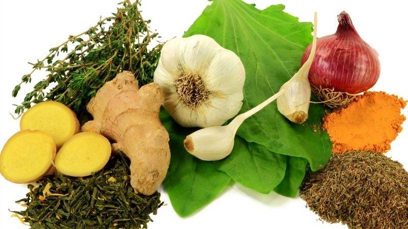 Antibióticos Naturais Para Prevenir as Infecções