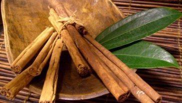 Chá de Louro e Canela Para Queimar Gordura e Perder Peso