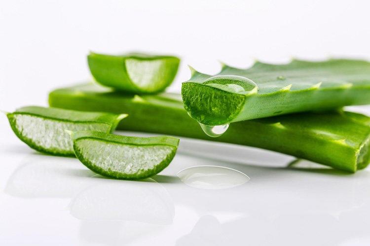 aloe vera para acne e hidratação da pele