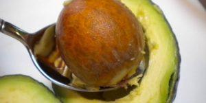 como usar a semente de abacate?