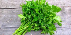 quais os benefícios da receita com salsa para varizes?