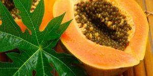 benefícios do chá de folhas de mamão