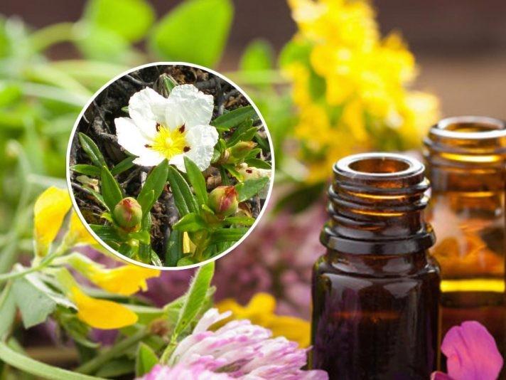 botox caseiro para anti-envelhecimento