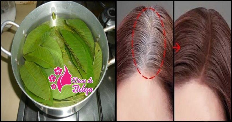 cha de folha de goiaba no cabelo