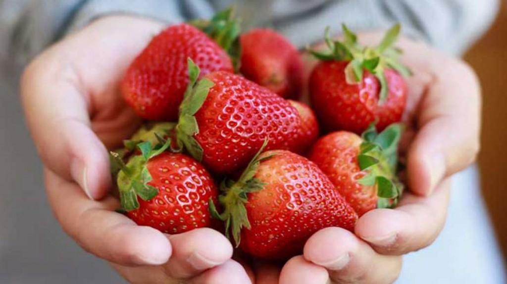 morango e uma das frutas vermelhas